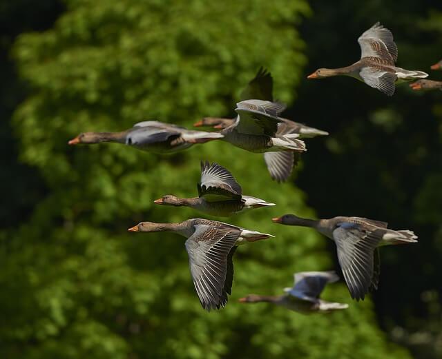Vogelwering